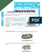 4 Ficha-Funciones-Básicas-de-los-Seres-Vivos-para-Cuarto-de-Primaria.doc