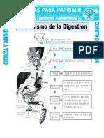5 Ficha Mecanismo de La Digestion Para Cuarto de Primaria