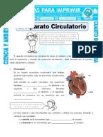 9 Ficha El Aparato Circulatorio Para Cuarto de Primaria (1)