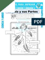 17 Ficha-La-Raiz-y-sus-Partes-para-Cuarto-de-Primaria.doc