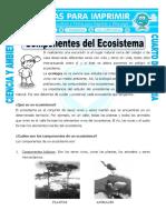 29 Ficha Componentes Del Ecosistema Para Cuarto de Primaria
