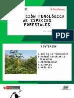 FENOLOGIA