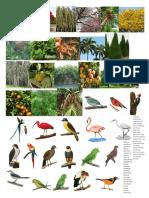 Aves y Arboles Compañero