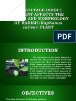 Low voltage direct current affects the growth and morphology of radish plant