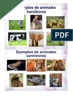 Animales Acuaticos Vertebrados Aereos Terestres