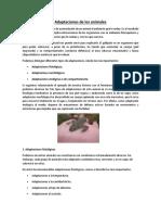 Adaptaciones de los animales(INFORME).docx