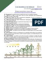 Etapas Fenologicas de Cereales y Oleaginosas