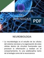 Neurobiología