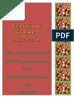 327102584-Introduccion-Cultivo-de-Cebolla.docx