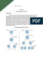 294474468-Practica-4-Meiosis.doc