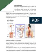 375542997-Cual-Es-La-Funcion-de-Nutricion.docx