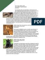 Animales en Peligro de Extincion Guatemala