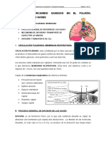 intercambio_gases_pulmon_transporte_gases.doc