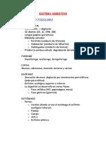 sistema_digestivo.doc