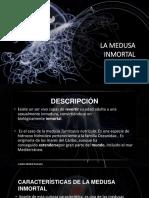 Carlos Michel Fumero_La Medusa Inmortal