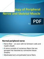 9. Pathology of Peripheral nerve and Skeletal Muscle - DA.pptx