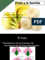 Frutos y Semilla