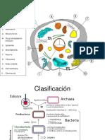 Estructuras microbianas