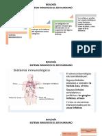 BIOLOGÍA. sistema inmune 8°