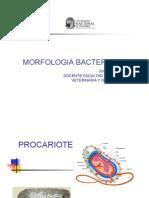 Morfologia Bacteriana .PDF.