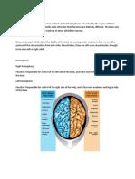 The Human Brain erty.doc