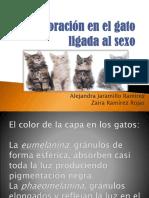 Coloración-en-el-gato