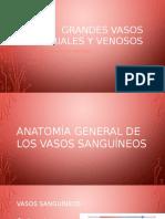 Grandes Vasos Arteriales y Venosos