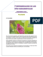Plagas y Enfermedades de Los Cultivos Ornamentales