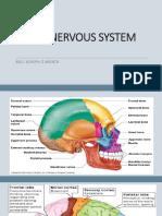 ccn-nervous-system (1).pptx