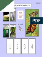 Sequencia da Metamorfose da Borboleta 1.pdf