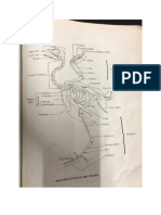 Anatomy of Chicken & Cat + Nomenclature