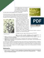 anfibios biologia descriptiva 1