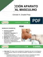 Inspección Aparato Genital Masculino