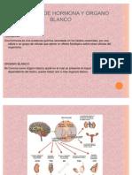 Concepto de Hormona y Organo Blanco