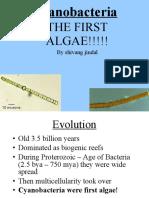 Cyanobacteria 2