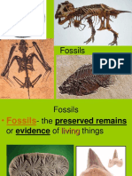 Fossils Aboluterelative Dating