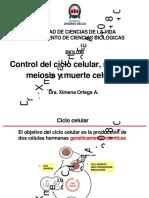 control ciclo celular