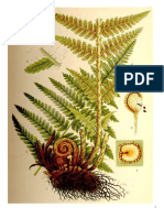 Schede botaniche piante