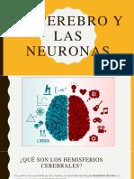 El Cerebro y Las Neuronas