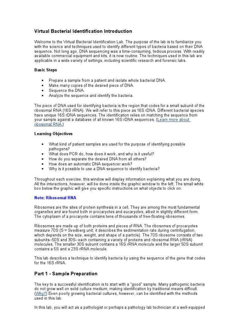 Virtual Bacterial Identification Introduction – Gel Electrophoresis Virtual Lab Worksheet