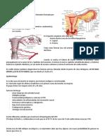 patologías del cuello uterino