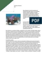 La riqueza natural y cultural de Banco Chinchorro(funciones).docx