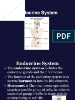 Endocrine Systemnew