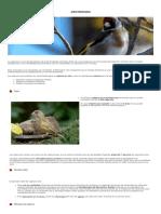 Aves Fringílidas _ Comunidad de Madrid