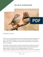 Aves Que Se Burlan de La Contaminación