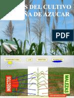 3_ Clase Ent. Aplic._plagas de Caña de Azucar