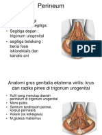 3. Perineum Bn. Mrt. 2015.ppt