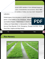 Varieties in Rice Nursery-newformat