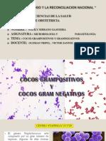 4. Cocos Gran Positivos y Gram Negativos