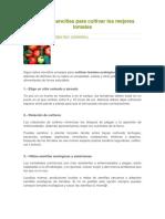 10 Reglas Sencillas Para Cultivar Los Mejores Tomates